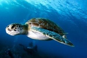 sonhar-com-tartaruga